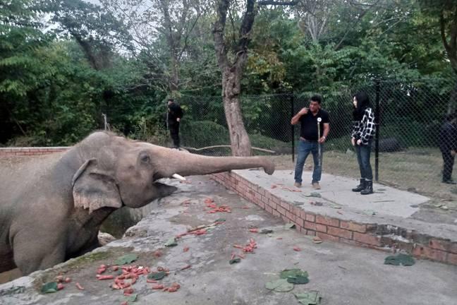 Cher finalmente conhece o 'elefante mais solitário do mundo' depois de ajudá-lo a libertá-lo do zoológico