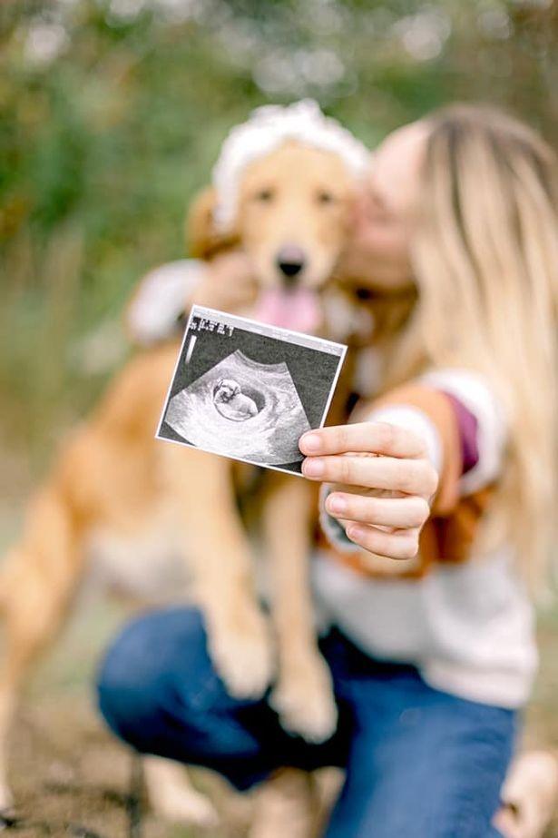 Sessão de fotos adorável de uma golden retriever grávida está fazendo sucesso