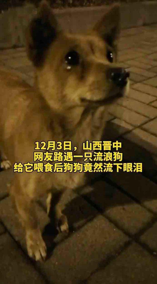 """Um cachorro perdido parece """"chorar"""" enquanto um estranho lhe dá comida"""
