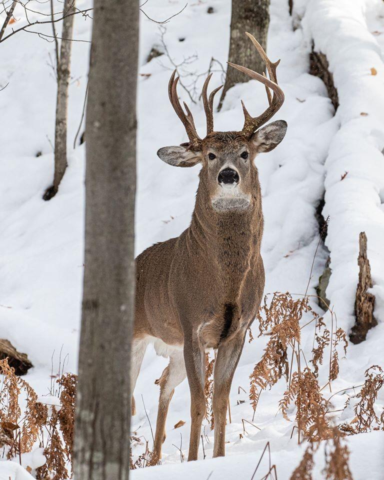 Bombeiros resgatam cervos afogados de Frozen Lake, no Kansas