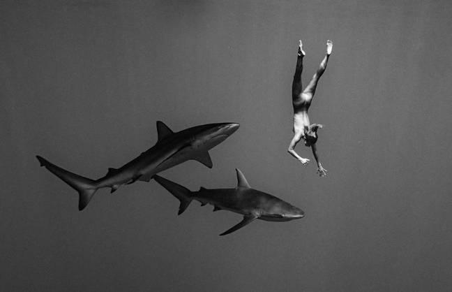 Modelo da Playboy tira a roupa e nada nua com tubarões