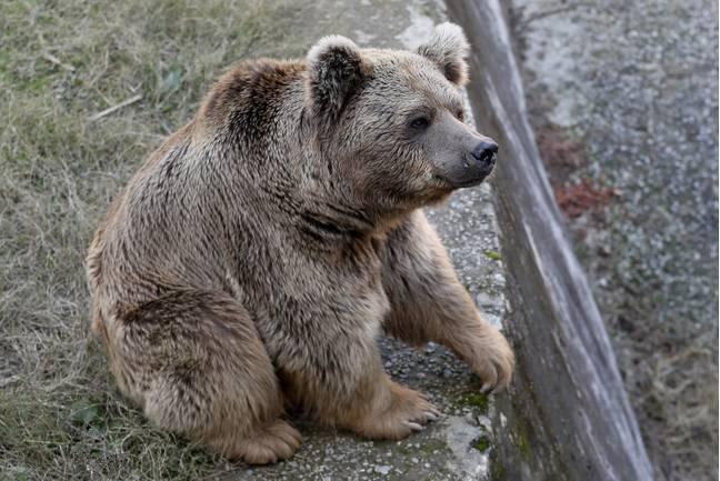 Dois ursos são os últimos a deixar o 'pior zoológico do mundo' no Paquistão