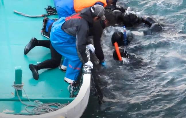 Grupo de mais de 100 golfinhos nariz de garrafa agrupados na famosa enseada japonesa