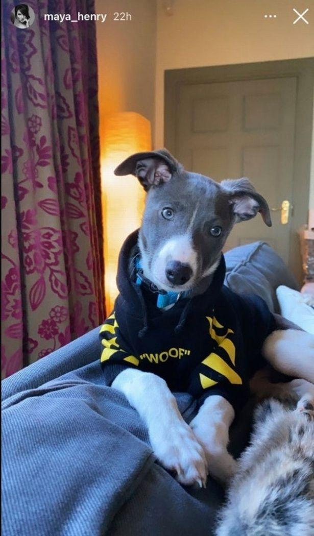 A noiva de Liam Payne, Maya Henry, revela o cachorrinho que ele lhe deu no Natal