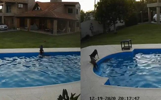 Cachorro salva cachorrinha cega de se afogar na piscina