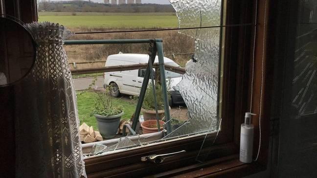 Mulher idosa quase sofre lesão quando o cisne bate na janela da sala
