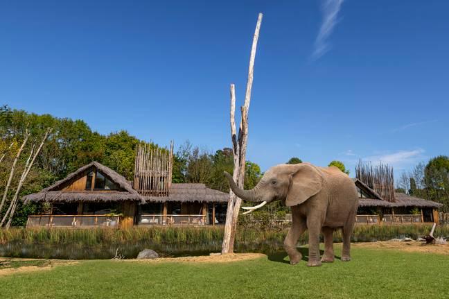 UK Safari Park forçado a atrasar o lançamento de hotéis de luxo devido ao Coronavirus